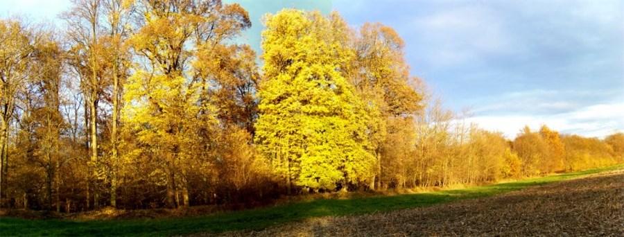 La forêt alluviale -  l'Ill- Wald