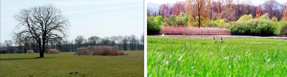 Paysages du Ried de Centre Alsace